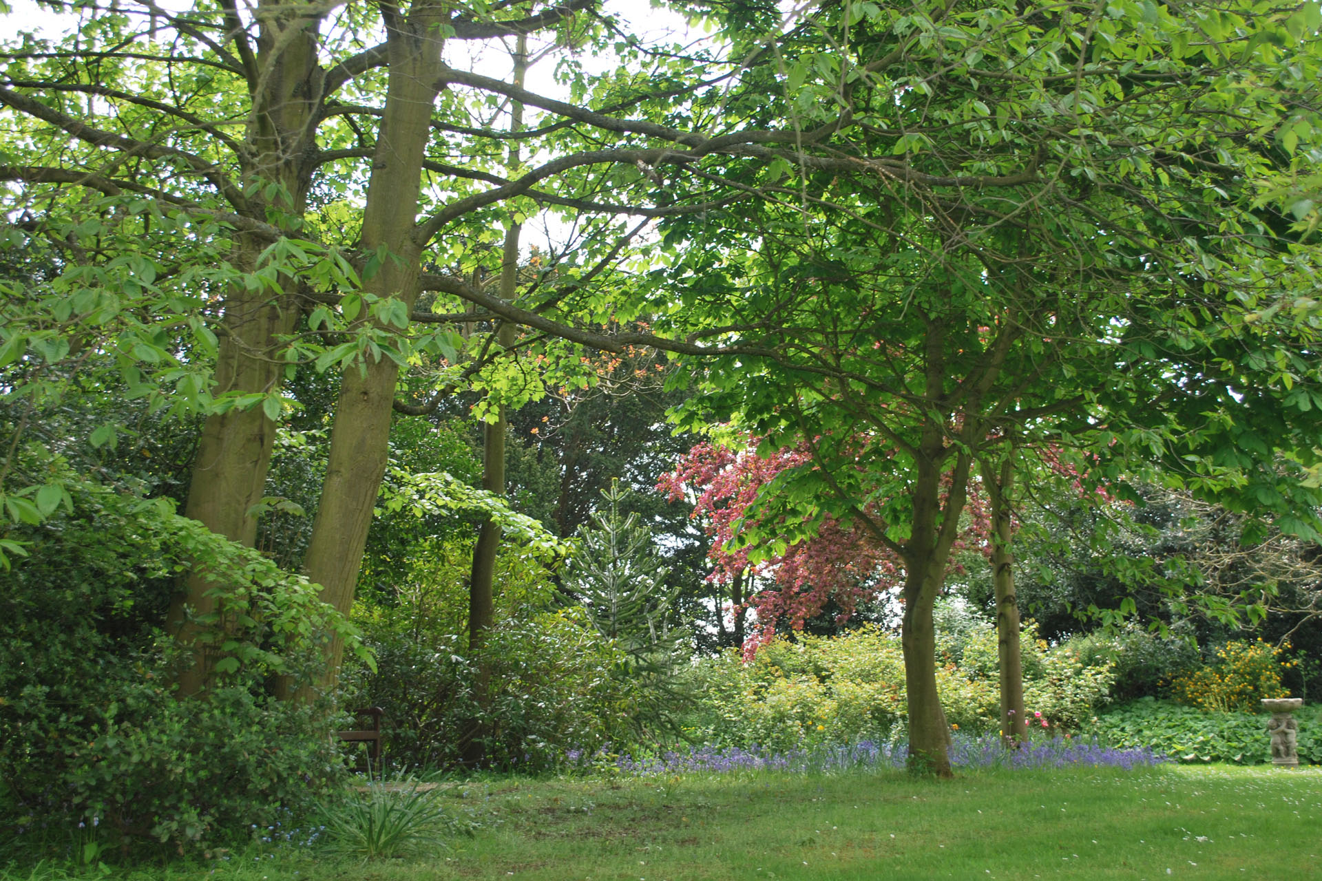 Hospice_grounds___flowers_May_2010_by_Clare_Campbell__296_banner